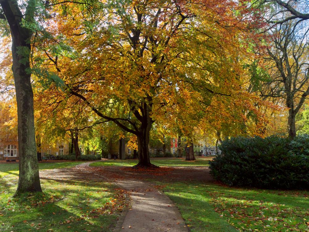August-Lütgens-Park