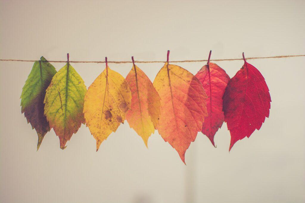 Malworkshop: Herbstfarben